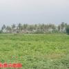 近後港國中台17優質農地